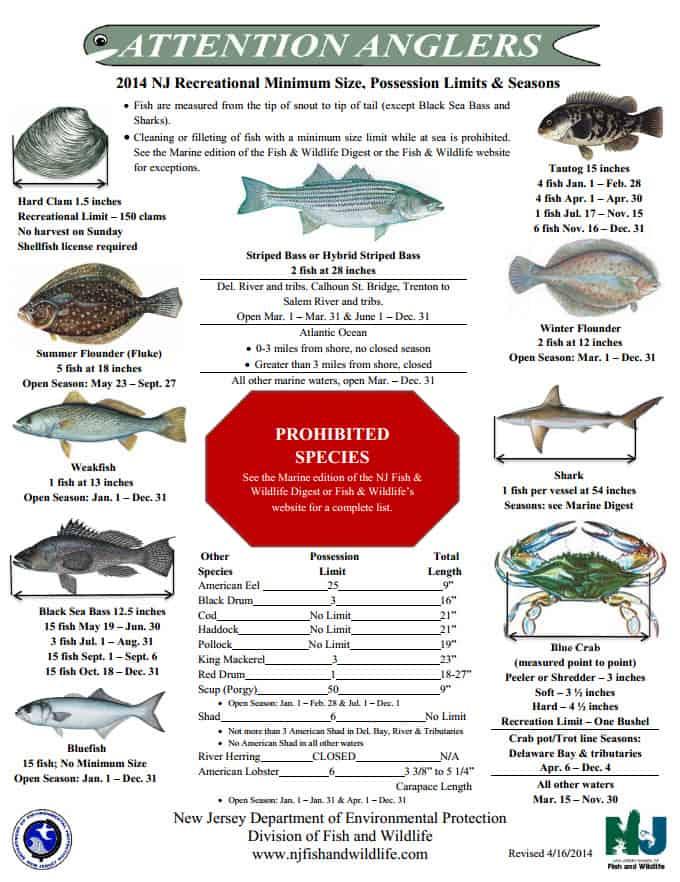 Nj saltwater fishing brigantinenow 2014 nj fishing sciox Image collections